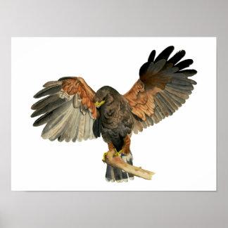 Le battement de faucon s'envole la peinture posters