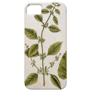 """Le baume, plaquent 27 """"d'un de fines herbes étuis iPhone 5"""
