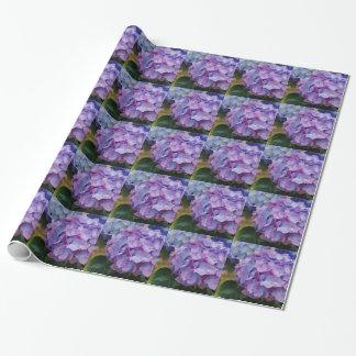 Le beau, pourpre hortensia fleurit, enveloppe de papier cadeau