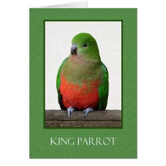 Le beau Roi Parrot, oiseau australien Cartes