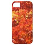 Le bel automne laisse des mercis de cadeaux de coq coques iPhone 5