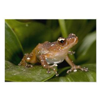 Le blanc a repéré la grenouille, pictus de Nytixal Photos Sur Toile