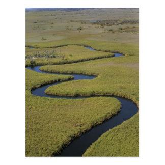 Le Botswana, Afrique. Rivière d'Okavango de vue Cartes Postales