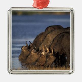 Le Botswana, parc national de Chobe, Buffalo de Ornement Carré Argenté