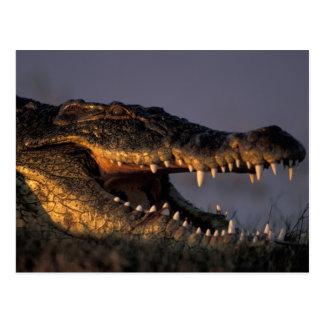 Le Botswana, parc national de Chobe, crocodile du Carte Postale