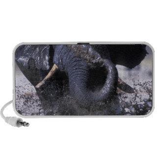 Le Botswana, parc national de Chobe, éléphant 2 Haut-parleur Ordinateur Portable