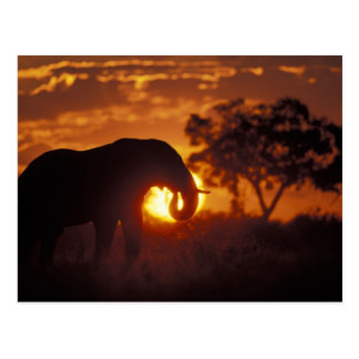 Le Botswana, parc national de Chobe, éléphant de Carte Postale