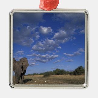 Le Botswana, parc national de Chobe, éléphant de Ornement Carré Argenté