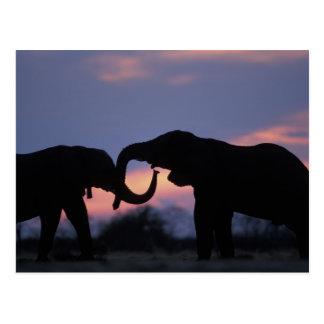 Le Botswana, parc national de Chobe, éléphants Cartes Postales
