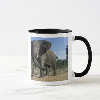Le Botswana, parc national de Chobe, Taureau Mug