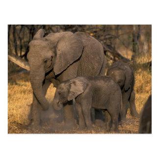 Le Botswana, réservation de jeu de Moremi, Carte Postale