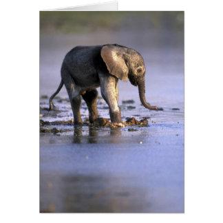 Le Botswana, réservation de jeu de Moremi, jeune Carte De Vœux