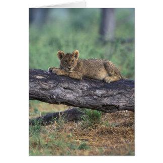 Le Botswana, réservation de jeu de Moremi, petit Carte De Vœux