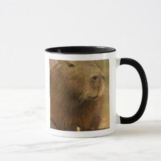 Le Brésil, Pantanal, Mattoo Grosso. Capybara Mug