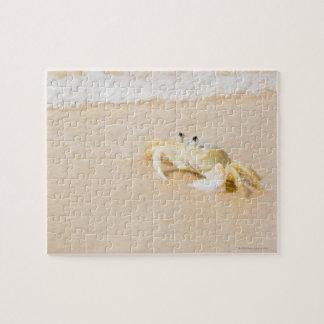 Le Brésil, Rio de Janeiro, Buzios, crabe dessus Puzzle