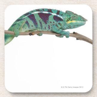 Le caméléon de panthère fouineur soit (les pardali dessous-de-verre