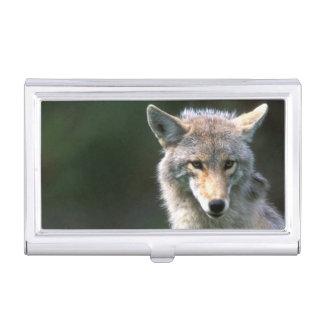 Le Canada, Colombie-Britannique, coyote (latrans Boîtier Pour Cartes De Visite