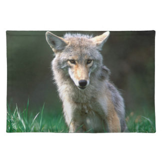 Le Canada, Colombie-Britannique, coyote (latrans Set De Table