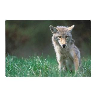 Le Canada, Colombie-Britannique, coyote (latrans Set De Table Stratifié