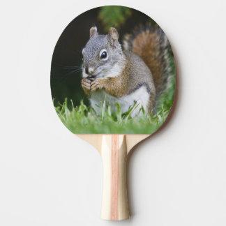 Le Canada, Colombie-Britannique, pin d'écureuil Raquette Tennis De Table