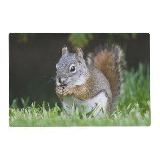 Le Canada, Colombie-Britannique, pin d'écureuil Set De Table Stratifié