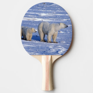 Le Canada, Manitoba, Churchill. Mère d'ours blanc Raquette De Ping Pong