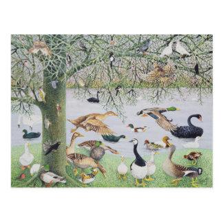 Le canard impair carte postale