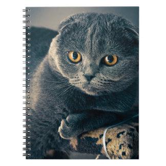 Le chat avec l'ambre observe le carnet de notes à