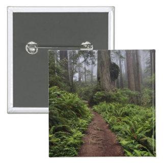 Le chemin à travers les arbres géants de séquoia a pin's