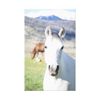 Le cheval dans les montagnes a enveloppé la toile