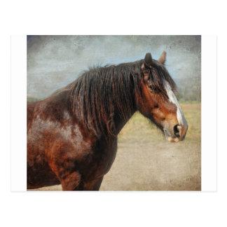 Le cheval de travail carte postale