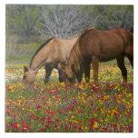 Le cheval quart dans le domaine des fleurs sauvage carreau