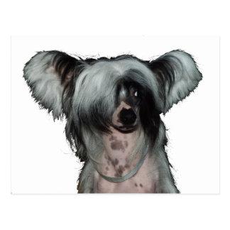 Le chien crêté chinois carte postale