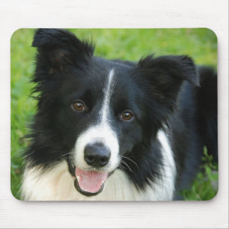 Le chien de border collie ajoutent l'animal famili tapis de souris