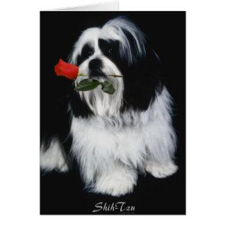 Le chien de Shih Tzu Cartes