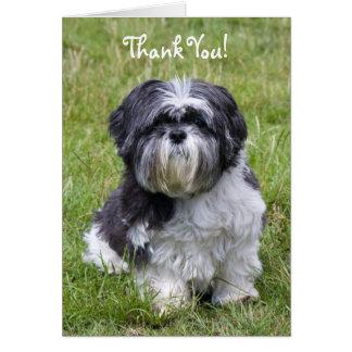 Le chien de Shih Tzu vous remercient carte de