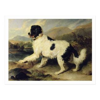 Le chien de Terre-Neuve a appelé Lion, 1824 Carte Postale