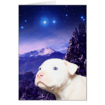 Le chien est Dieu écrit vers l'arrière… Cartes