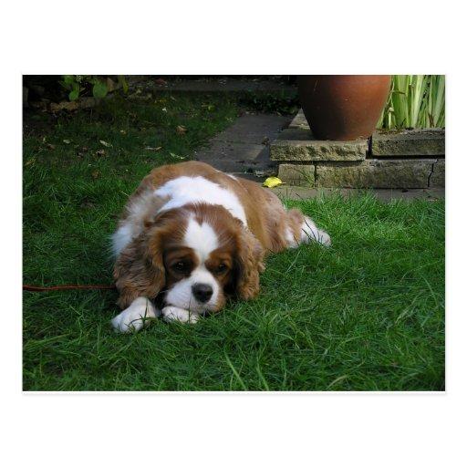 Le chien le plus mignon au monde a faim carte postale