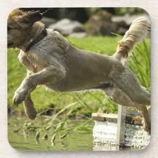 Le chien saute dans l'étang sous-bocks