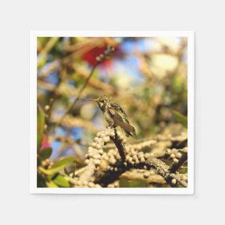 Le colibri d'Anna féminine, cocktail de photo Serviette En Papier
