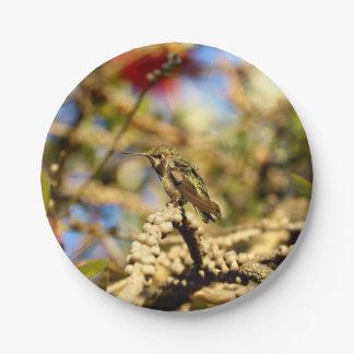 """Le colibri d'Anna féminine, la Californie, 7"""" Assiette En Papier 17,8 Cm"""
