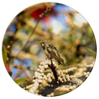 Le colibri d'Anna féminine, la Californie, Assiette En Porcelaine