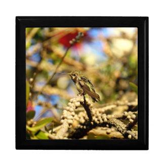 Le colibri d'Anna féminine, la Californie, grande Grande Boîte À Bijoux Carrée