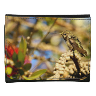 Le colibri d'Anna féminine, la Californie, photo