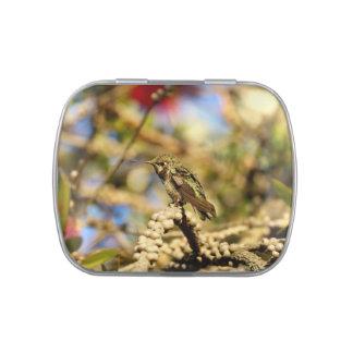 Le colibri d'Anna féminine, la Californie, photo Boite Jelly Belly