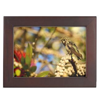 Le colibri d'Anna féminine, la Californie, photo Boîtes À Souvenirs