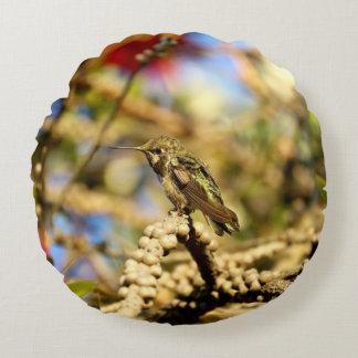 Le colibri d'Anna féminine, la Californie, photo Coussin Rond