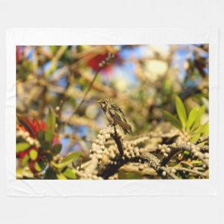 Le colibri d'Anna féminine, la Californie, photo Couverture Polaire