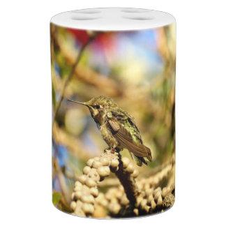 Le colibri d'Anna féminine, la Californie, photo Distributeurs De Savon
